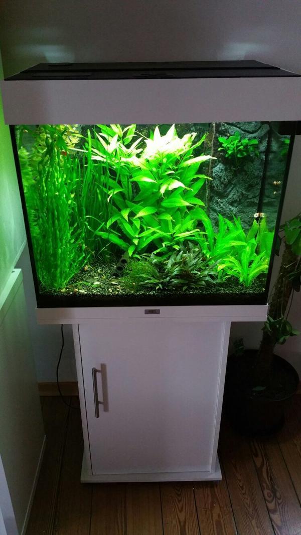 aquarium tisch kleinanzeigen aquarium fische zubeh r. Black Bedroom Furniture Sets. Home Design Ideas