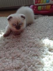 Kätzchen 9 Wochen