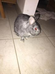 Kaninchen abzugeben !