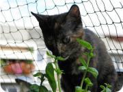 Katze Arielle zu