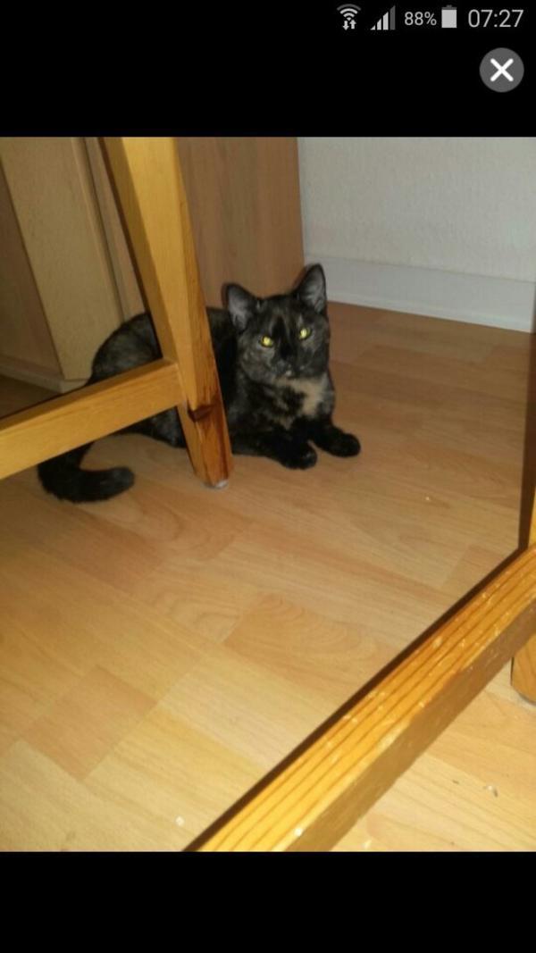 Katze In Lahr Katzen Kaufen Und Verkaufen Ber Private