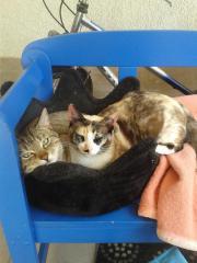 Katzenpaar (auch einzeln)