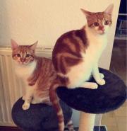 Katzenpärchen sucht liebevolles