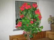 Kunstliche pflanze
