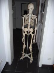 lebensgroßes Skelett