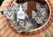 Mit Katzen in