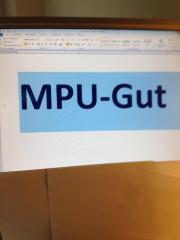 MPU-Führerschein Beratung