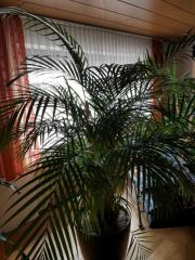 Palme über 2m