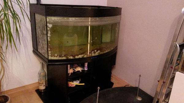 aquarium gebogen neu und gebraucht kaufen bei. Black Bedroom Furniture Sets. Home Design Ideas