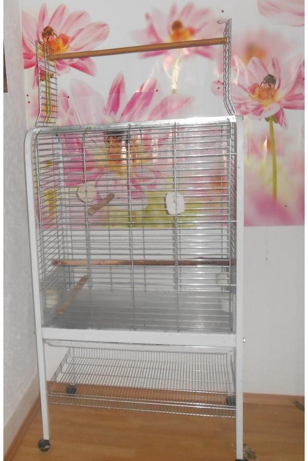 papageien k fig voliere graupapagei amazonen in albstadt v gel kaufen und verkaufen ber. Black Bedroom Furniture Sets. Home Design Ideas