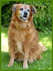 Patenhund: Goldi Poldi,