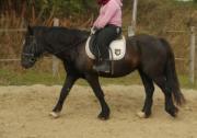 Pferd Tinkerstute zu
