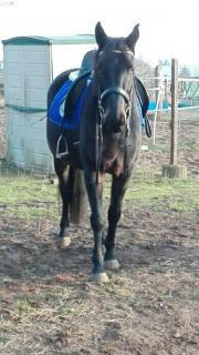 Pferdchen sucht Teilzeitreiter ;)