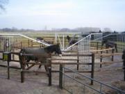 Pferde Führanlagen in