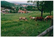 Pferdebox/Offenstall