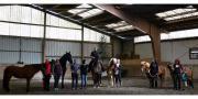 Pferdegerecht und losgelassen -