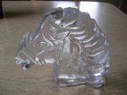 Pferdekopf aus Glas,