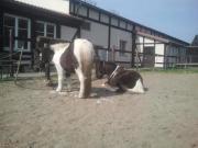 Pflegebeteiligung für Pony