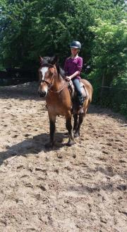 Pony Stute im