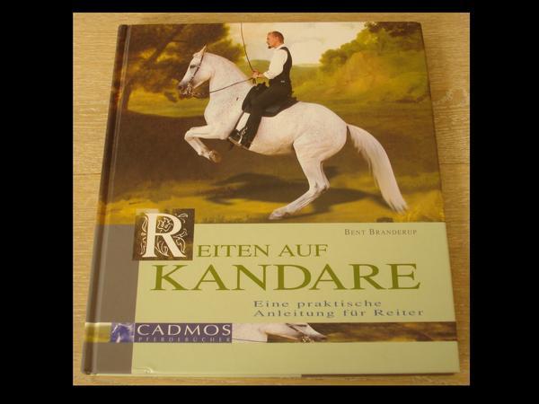 Pferd Mit Kandare Reiten Reiten Auf Kandare » Pferde