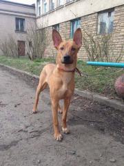 Rocky -Tierschutzhund-