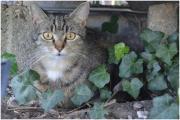 Schmusige Katze sucht