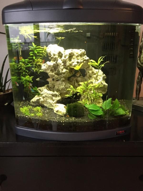 aquarium fische zubeh r in frankfurt am main kaufen. Black Bedroom Furniture Sets. Home Design Ideas