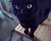 Schwarze Katze in
