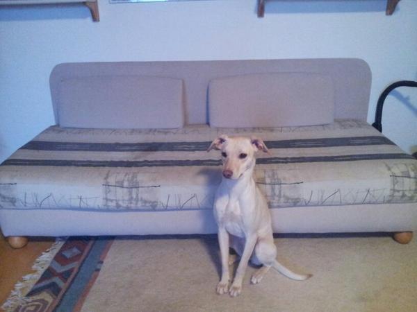 Sofa zu verschenken in lauf polster sessel couch for Sofa zu verschenken