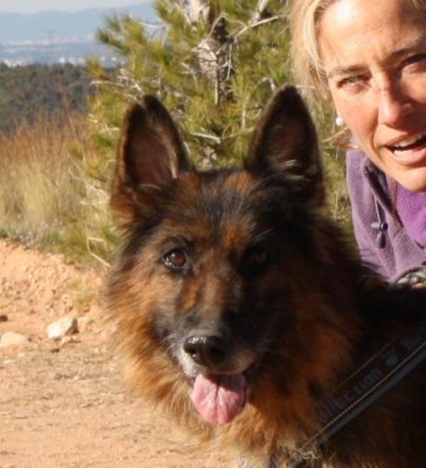 Bild Hund kehrt Tumor anal zurück