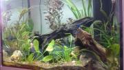 Suche Aquarium