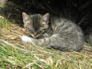 SUCHE: Katze Lucy