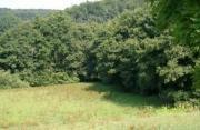 Suche Wald-Grundstück