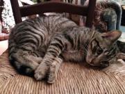 süße Katzen Greta
