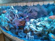 Übernehme Aquarium Pflege