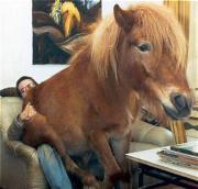 Unsere Pferde und