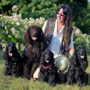 Urlaubsbetreuung für Hunde,