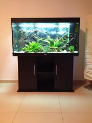 Verkaufe Aquarium JUWEL
