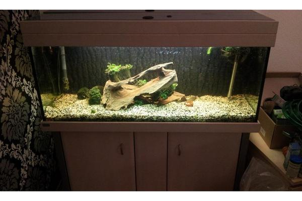 Aquarium fische zubeh r in darmstadt kaufen bei deine for Aquarium 120x40x50