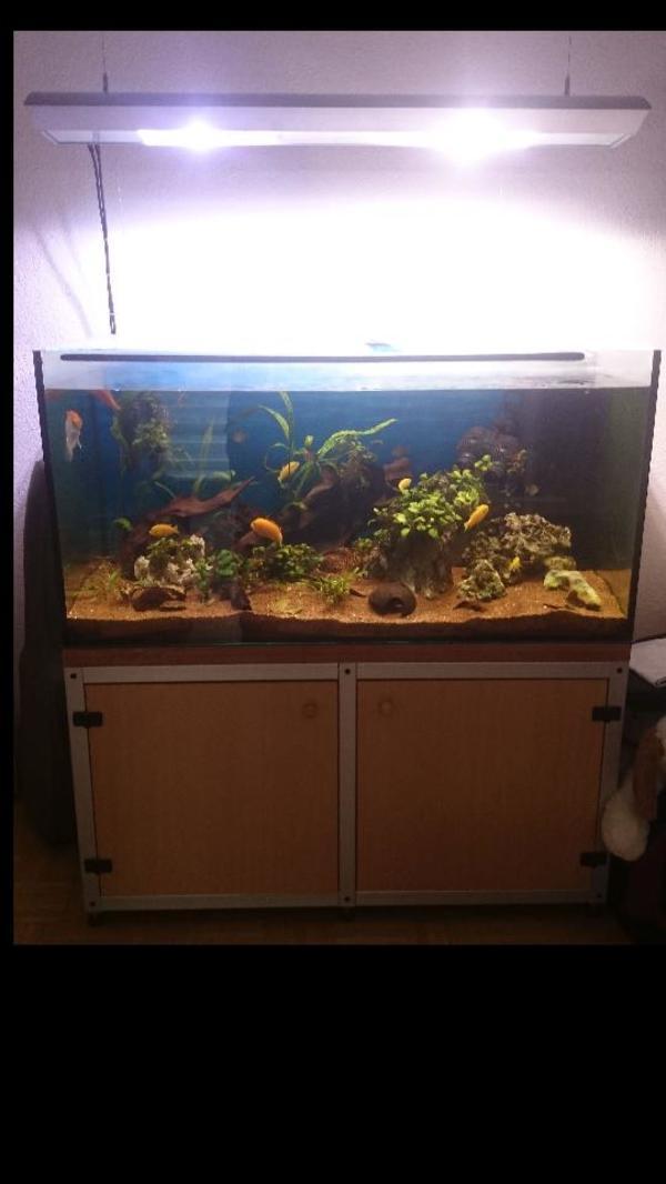 Verschenke beinahe mein » Fische, Aquaristik