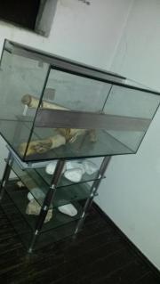 voll glas terrarium