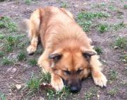 Welpen und Junghunde -