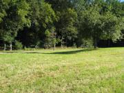 Wiese Grünland Baumwiese