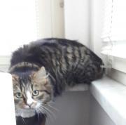 Wunderschöne Katze