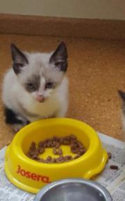 Zuckersüße Katzenbabys