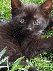 Mischlingskatze Katzenbaby  Unsere
