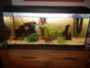 180l Aquarium Komplett