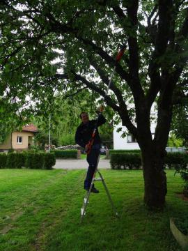 2021 Gartenarbeiten aller Art in Sinsheim: Kleinanzeigen aus Zuzenhausen - Rubrik Stellengesuche Festanstellung