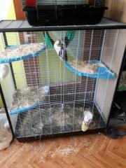 3 Ratti Damen