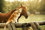 30 Pferdehöfe zum
